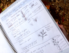 Forest Watch UNH Diary
