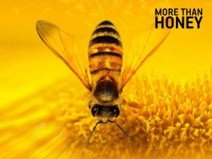 film-more-than-honey