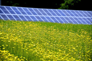 Ground mounted solar array for a business